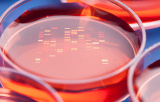 Transfection reagents