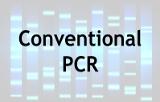 Conventional PCR
